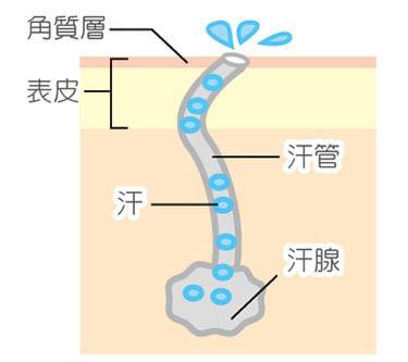 汗疱(異汗性湿疹)のメカニズム1